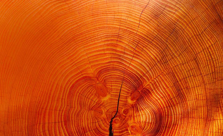 focus-wave-of-wood-fond-2