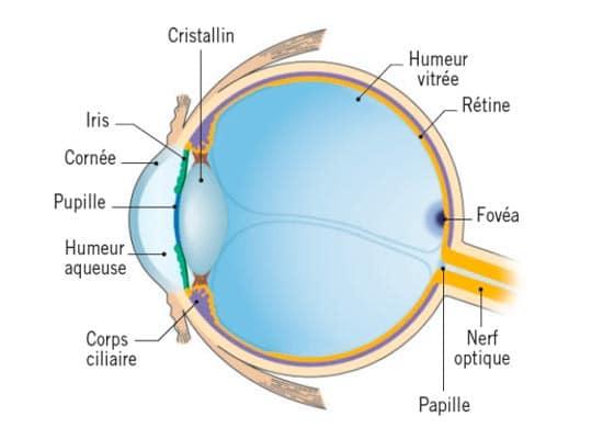 lunettes-contre-la-dyslexie-lexilens-atol-shema-oeil